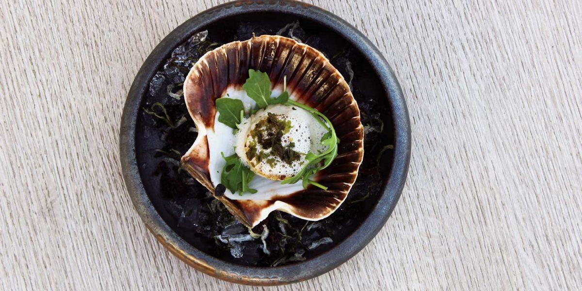Förrätt med pilgrimsmussla på restaurang Latitud 58° i Grebbestad