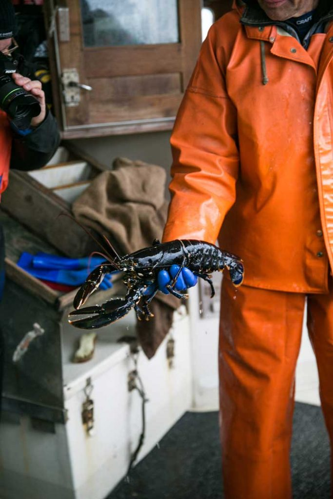 Hummerfiske Fjällbacka